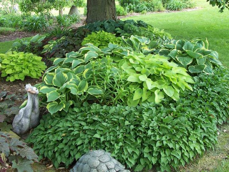 Deep Roots Garden Design Blog: June 2012