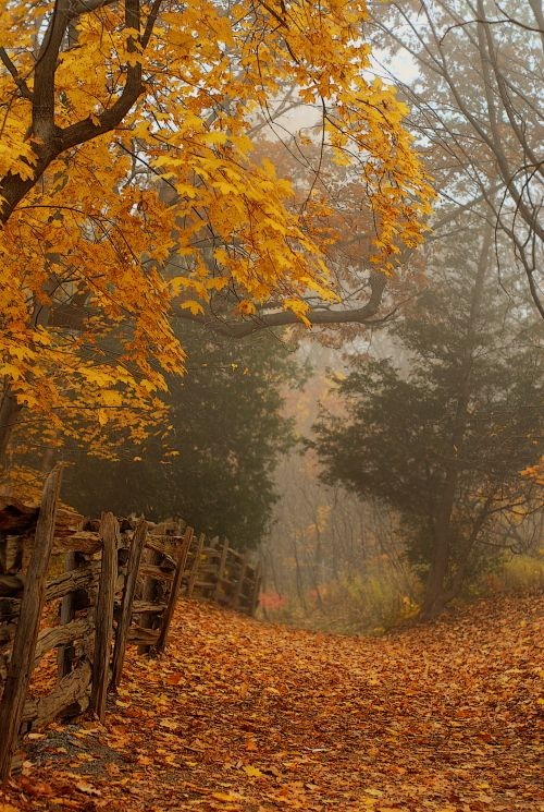 gelbe Blätter + Zaun