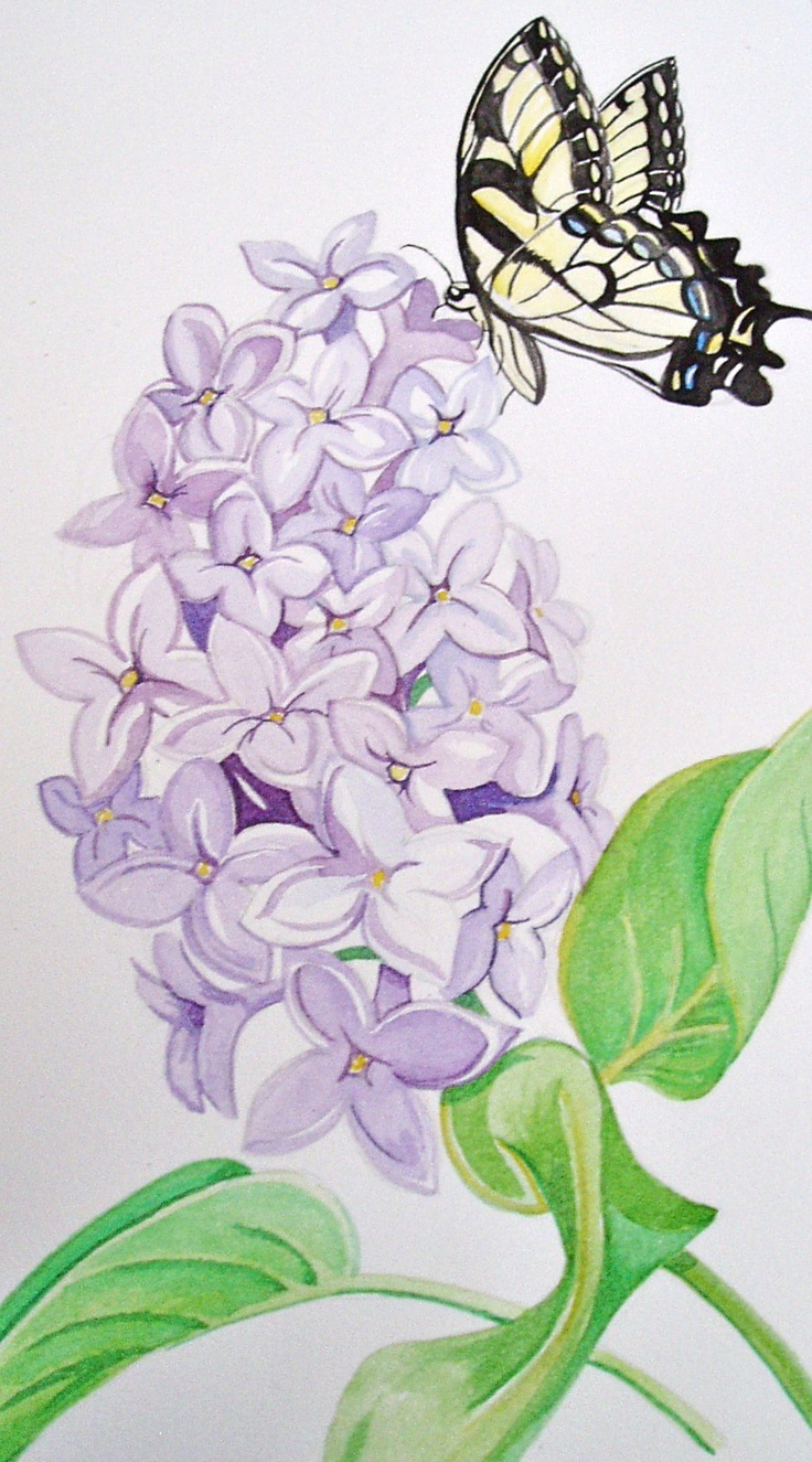 Butterfly on Lilac Watercolor