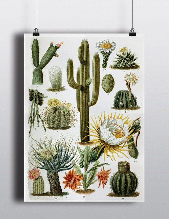 Antique 1800s Cactus Chart Poster Art Print Illustration Scientific Chart Botanical Botany Plants Nature Print Cacti Succulents Wall Decor