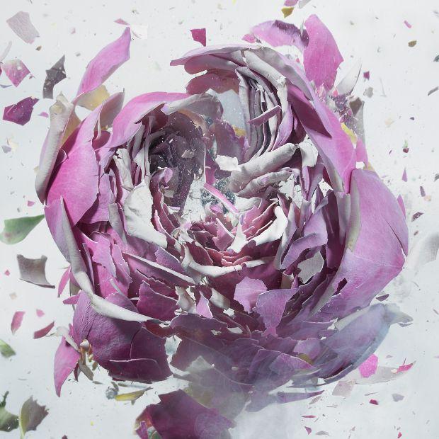 Martin Klimas immerge des fleurs dans de l'azote liquide et ensuite, les fait exploser à l'aide d'un pistolet à air comprimé. Explosions florales par Martin Klimas