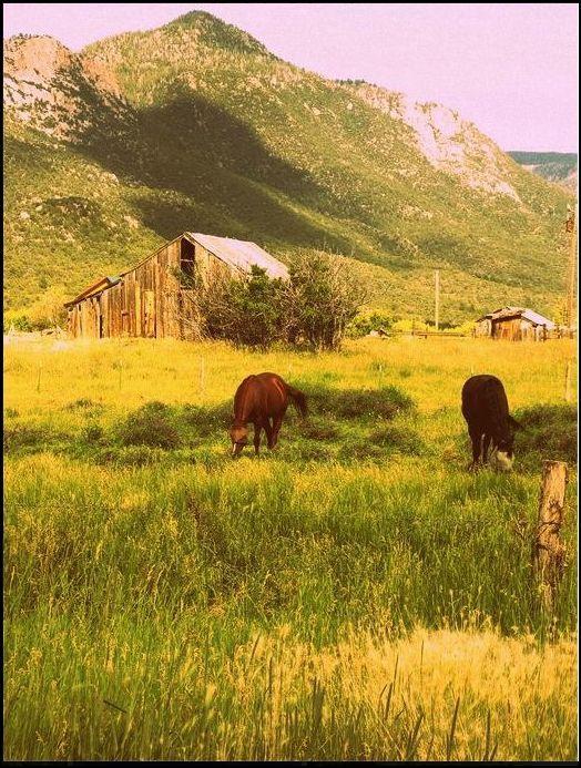 Pine Valley Utah
