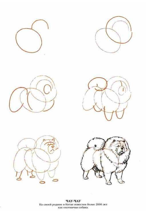 Иллюстрация 9 из 13 для Рисуем 50 собак - Ли Эймис | Лабиринт - книги. Источник: Спанч Боб