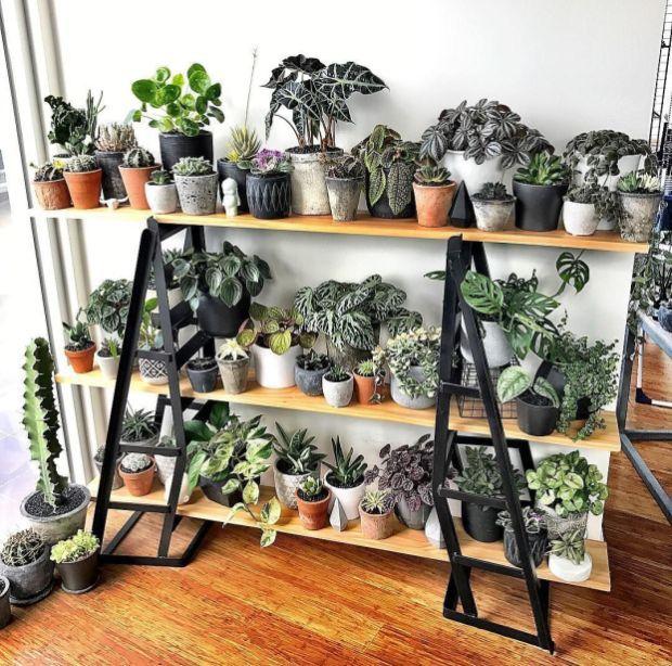 Beautiful Indoor Garden Decoration Ideas 24 Plants Plant Decor Indoor Plants