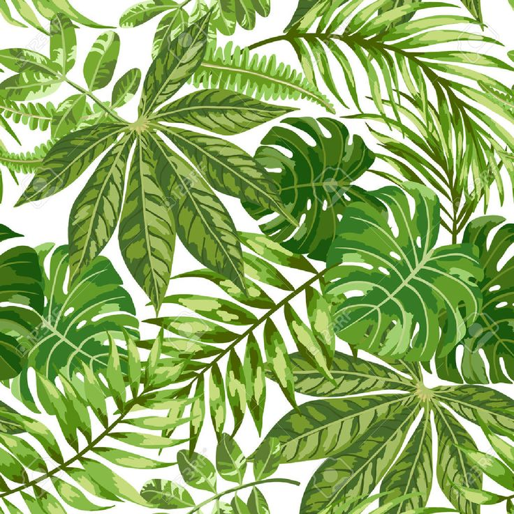 40210114-Seamless-pattern-esotico-con-foglie-tropicali-su-uno-sfondo-bianco-Illustrazione-vettoriale--Archivio-Fotografico.jpg (1300×1300)