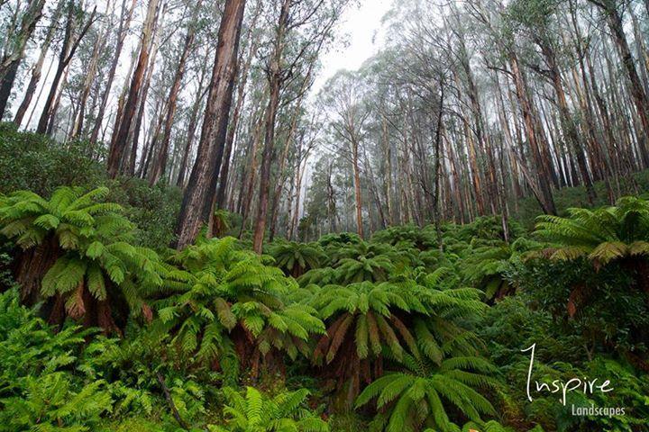 Falls Creek, Victoria (image via Inspire Landscapes)