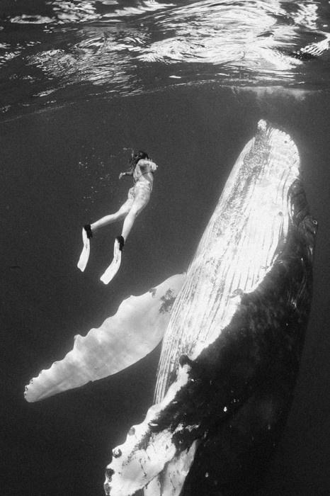 woman & whale