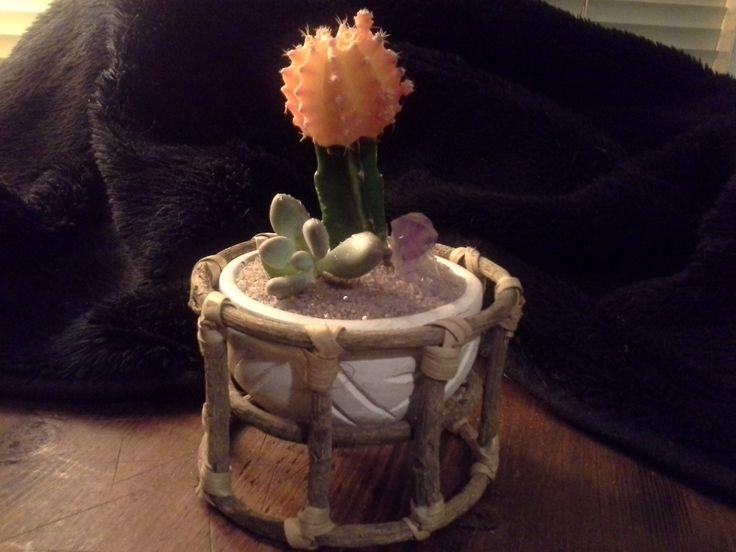 Tahitian cacti planter
