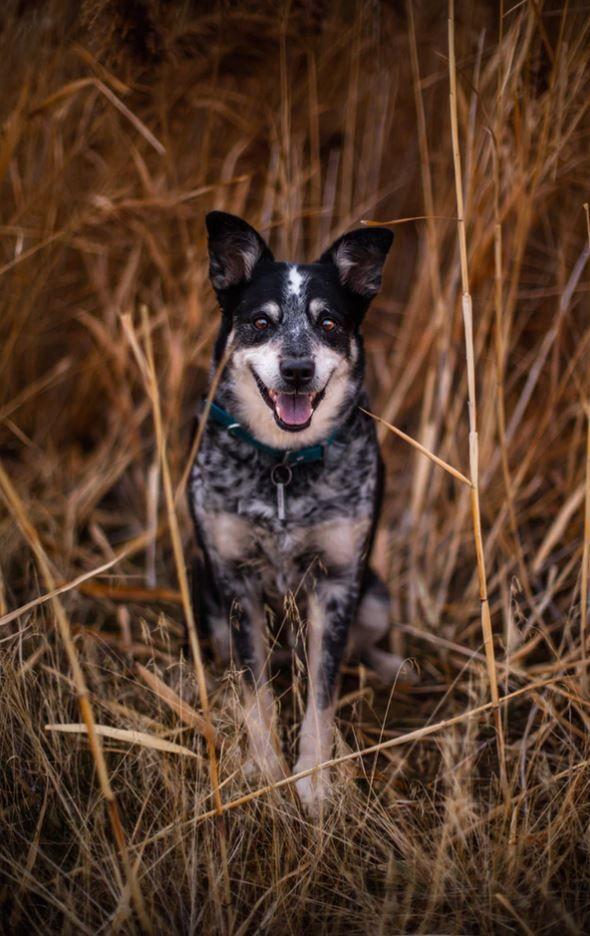 Random Inspiration 11 Dog Training French Bulldog Pictures