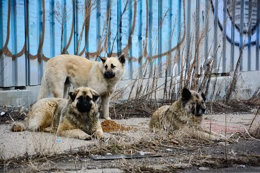 Please Help The Gypsy Dogs Of Detroit