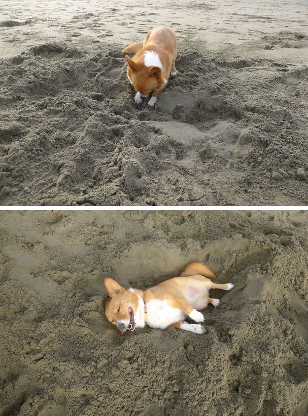 This dog who dug himself his very own nap hole. | 29 Dogs You Won't Believe Actually Exist * My dog does this - the sand is cooler!!!: