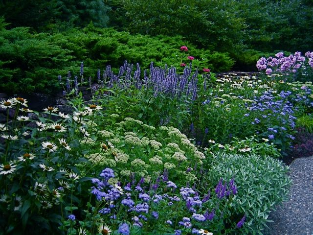 the blues and purples in this lovely garden include. Black Bedroom Furniture Sets. Home Design Ideas