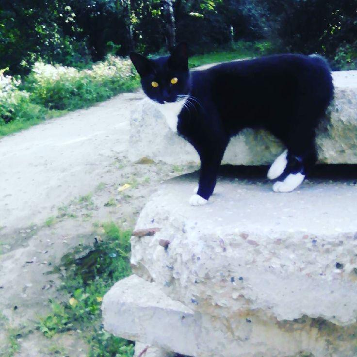 Черный котик из Черного ))