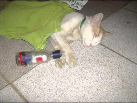 Mi gato borracho y dormidote con sus amigos
