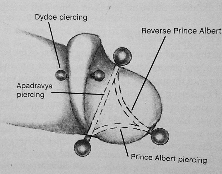 penis piercing procedure