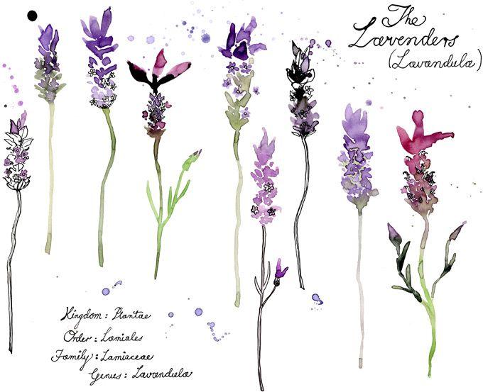 Margaret Berg. (activitate in gradina: flori in acuarele)