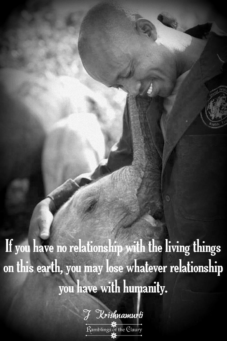 best images about anti cruelty vegan and animal on if you have no relationship the living things on earth you lose whatever