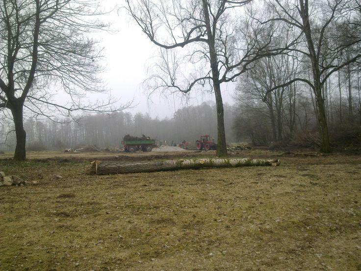 Teren na przyszły ogród