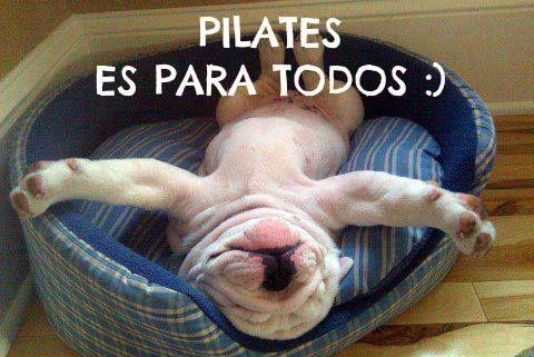 Amb aquesta imatge tan graciosa, comencem el #dijous. I és que el #pilates és per a tothom. Bon dia!!!!!