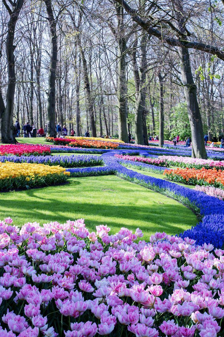 Tulips garden Keukenhof,  Amsterdam
