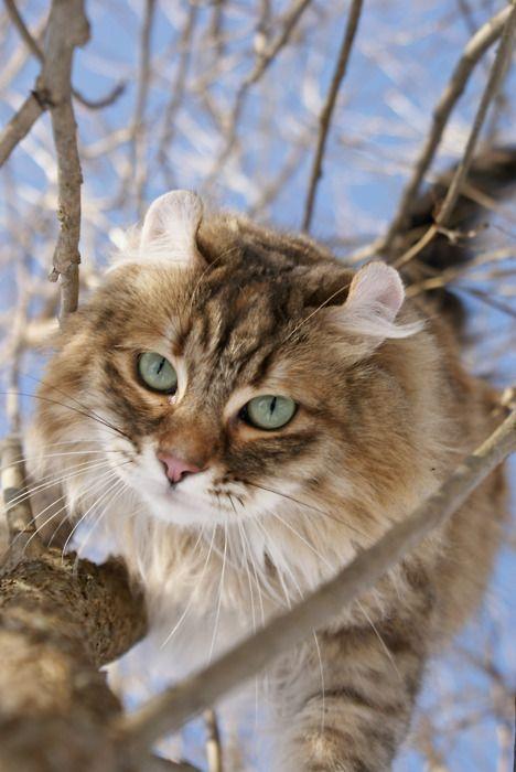 tree:cat