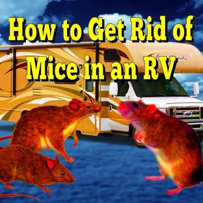 how to get rid of mice in my room
