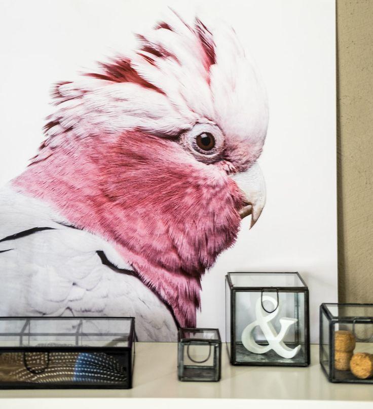fim.works | Lifestyle Blog | Regal-Dekoration mit Kakadu-Print und Glasboxen