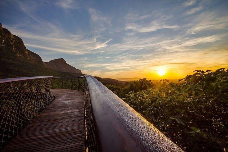 Дорога над верхушками деревьев: новый деревянный настил в ботаническом саду в Кейптауне, ЮАР