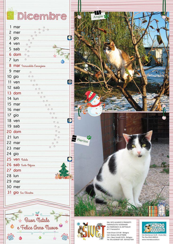 #calendar #december #cats #calendario #dicembre #gatti