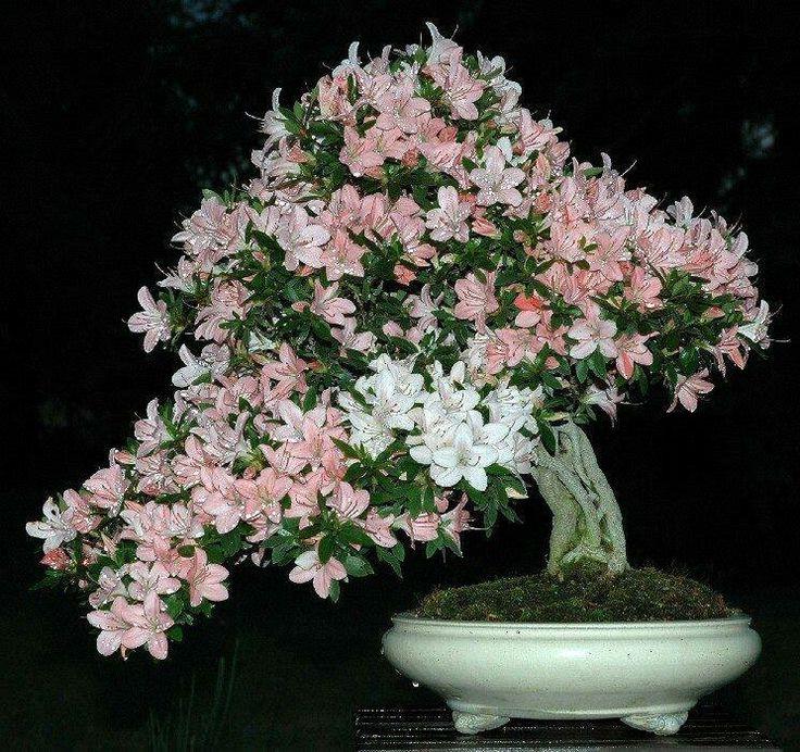 Japanese Garden Indoor: 319 Best Images About Japanese Garden On Pinterest