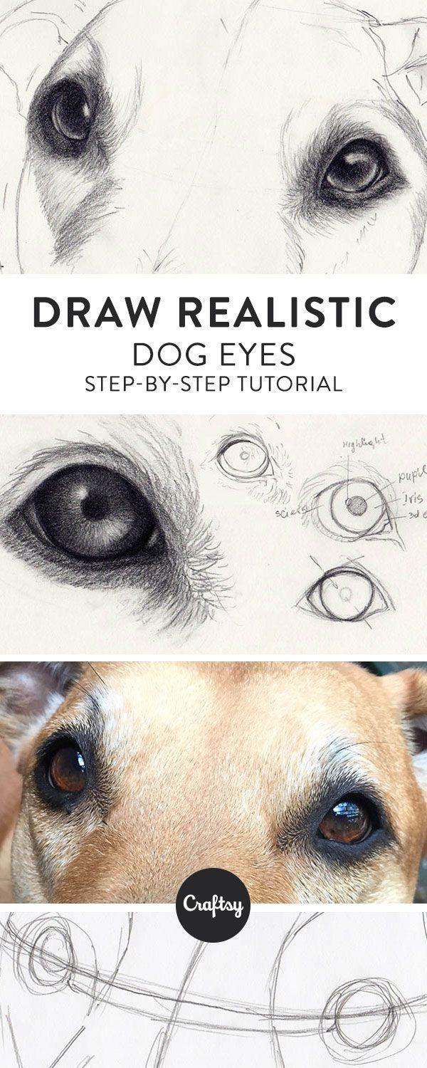 Drawing a realistic dog starts with the eyes! Learn about the structure of a dog's eye and get a step-by-step tutorial for how to draw dog eyes on Craftsy! #DogDrawing #drawingrealistic #realisticdrawings