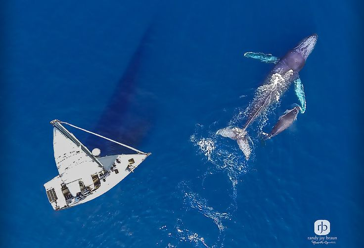 Maui Sailing Charters offers guided whale watching charters aboard a private charter sailboat on Maui. Set sail with us!