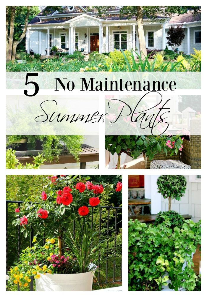 142 best duke manor farm images on pinterest rock stars for Best no maintenance plants