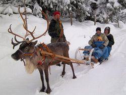 Chemins du Nord - Balades en traîneau tiré par des rennes et des chiens - Orbey - Alsace - Activités Neige