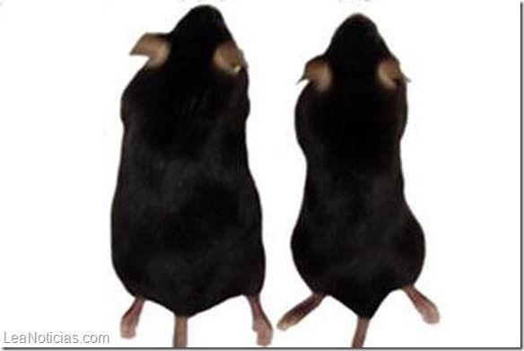 Un 'chorro de aire frío' para perder esos kilos de más - http://www.leanoticias.com/2015/01/08/un-chorro-de-aire-frio-para-perder-esos-kilos-de-mas/