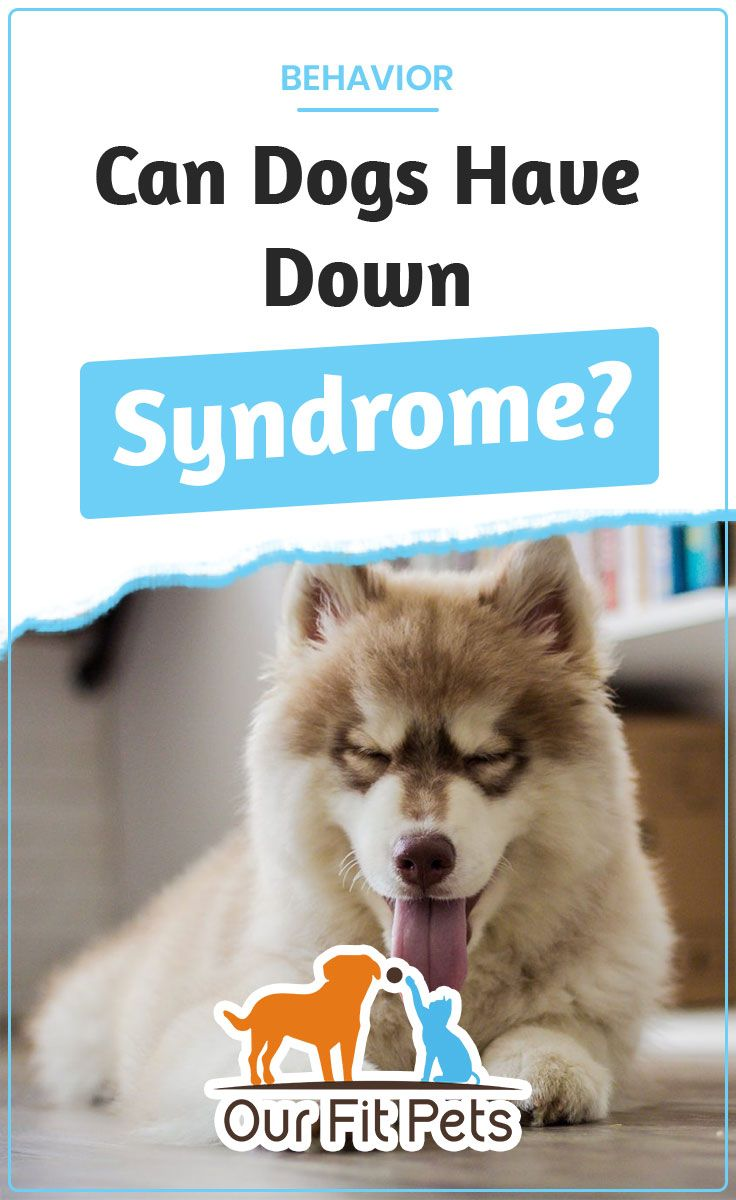 Can Dogs Have Down Syndrome Dogs Down Syndrome Dog Down Syndrome
