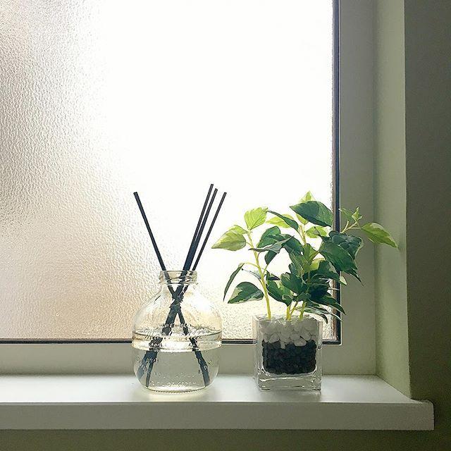 暮らしのセンスが試される トイレをオシャレに見せる7つのポイント Folk トイレ 観葉植物 観葉植物 玄関 インテリア おしゃれ