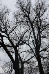 Посадка деревьев крупномеров - Садоводка