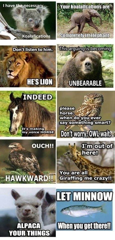 @Allyson Ayers this should make your day.: Laughing, Funnies Animal, Animal Jokes, Animal Humor, Hilary, Giggl, Animal Puns, Smile, Funnies Stuff