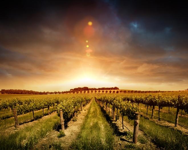 Vineyards in #SouthAustralia, #Australia. #travel