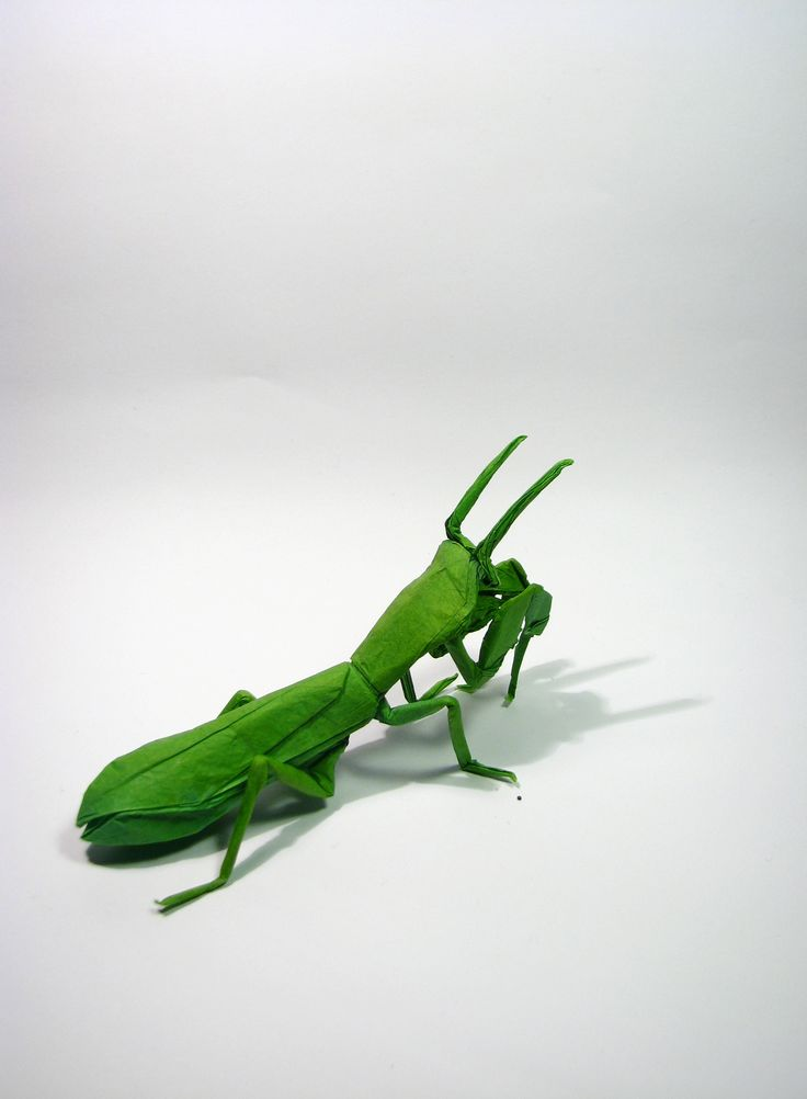 Praying mantis research paper