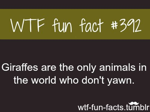 animals facts MORE OF WTF-FUN-FACTS are coming HERE  funny and weird facts ONLY