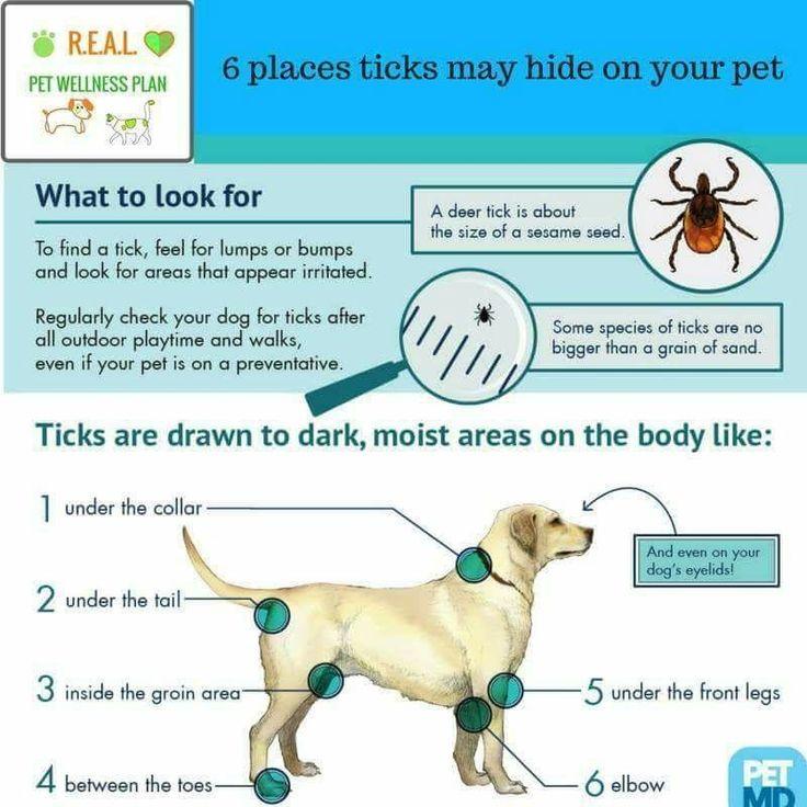 Pin by Cyndy Dent BrooksFetty on Pet Info Ticks on dogs