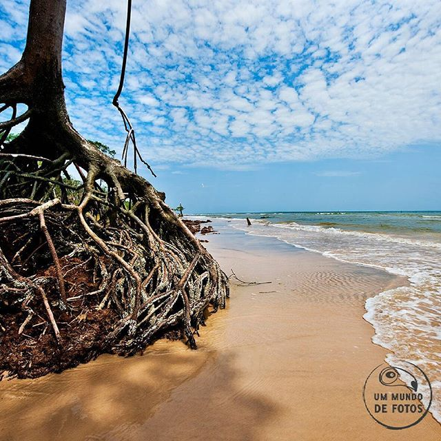 Estamos loucos para compartilhar  lugares fantásticos pelo Brasil  Árvore a beira-mar. Araruna - Ilha de Marajó, PA  #araruna  #PA  #ilhademarajo #fotografia #aventura #viagens #pará  #parquesnacionais #praia #mangue #beautifulplanet #travelphotography #brazilbeach #praia #paraíso #brazilnature #brazil #exploringtheglobe #vibenaviagem #vivadeperto #natureza #biodiversidade #clicandobrasil #turismo #photolovers #worldplaces #visitbrazil #lovebrazil #photonature #explore #paradise