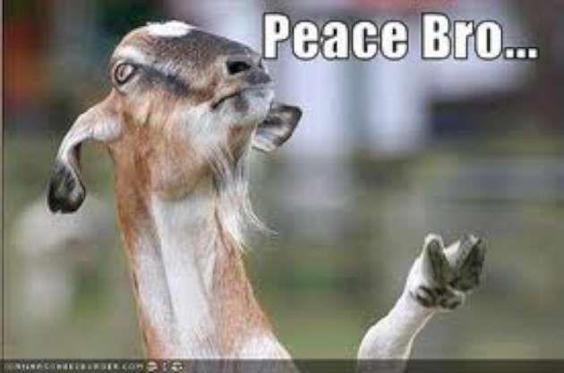 Vitamin-Ha – Funny Goat Memes peace bro-