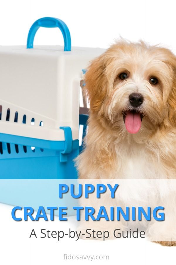 Crate Training Puppies 101 In 2020 With Images Crate Training