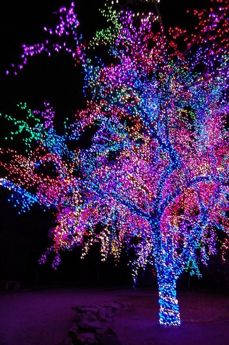 Holiday Lights... Can't even imagine how long it took to place these lights!