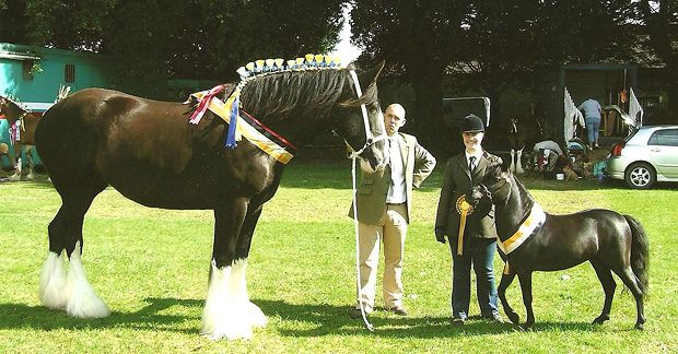 m Inature showing horses | South Wales Shire Horse Society Shire & Miniature Horse Show
