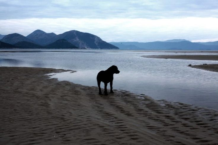 Labrador on Mouth of Neretva river; Photography by Vladimir Treščec, 2014. with Canon D5, Mark II.