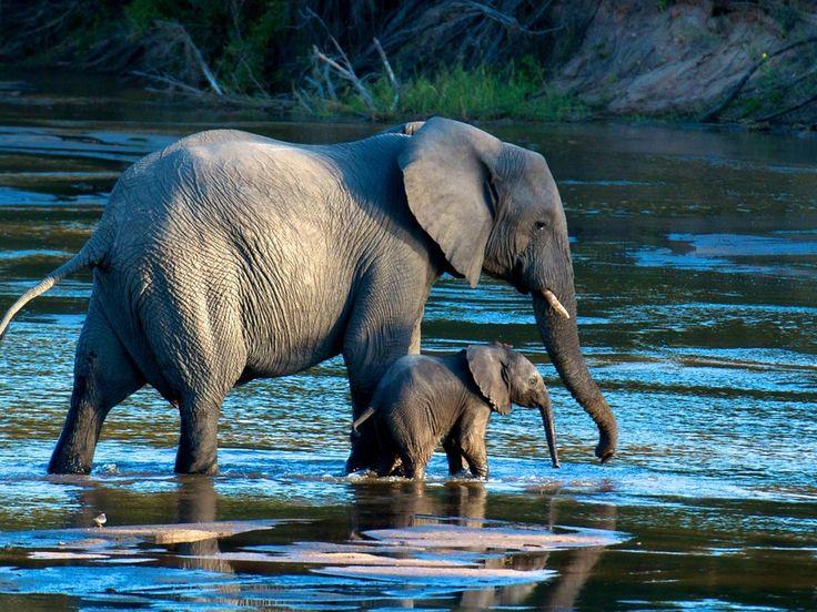 Elefantes!!!